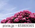 バラの花 自然 屋外 65869365