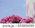 花びら 自然 空 65869499