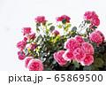 花 ピンク 花びら 65869500
