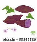紫芋と花のイラスト 65869589