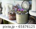 ガーデニングイメージ リメイク缶に入れたサボテン 65876125