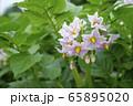 ジャガイモの花 65895020