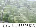 防虫ネット 市民農園 65895813