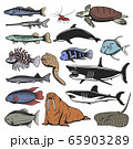 Sea animals, isolated fish and turtle 65903289