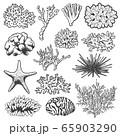 Starfish, sea urchin and underwater corals 65903290