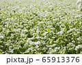 一面の蕎麦の花 蕎麦畑 65913376