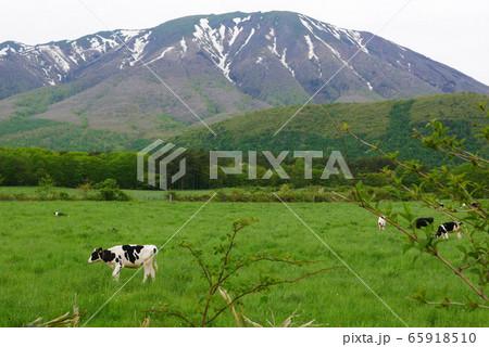 風景自然動物写真 残雪の残る風薫る岩手山麓のホルスタインの放牧 65918510