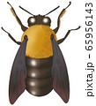 クマバチ 65956143