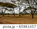 タンザニア・タランギーレ国立公園で見かけた、インパラとシマウマの群れ 65961457