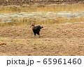 タンザニア・タランギーレ国立公園で見かけた、謎の野鳥 65961460