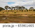 タンザニア・タランギーレ国立公園の干上がった川と、雲の隙間から見える青空 65961465
