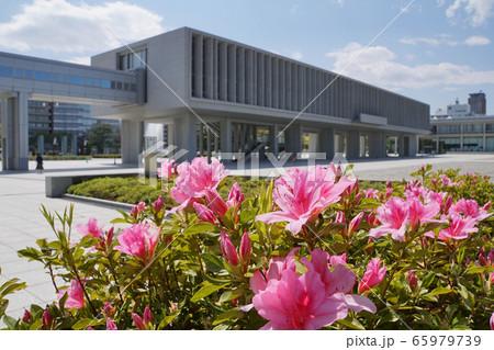 広島平和記念資料館とツツジ 65979739