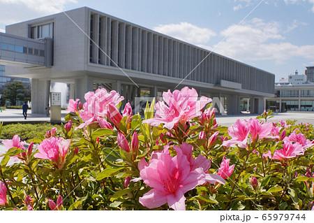 広島平和記念資料館とツツジ 65979744