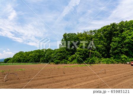 高原の野菜畑 春 65985121