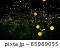 ヒメボタル乱舞 65989055