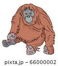 オラウータン 66000002