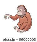 オラウータンの子ども 66000003