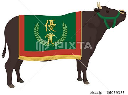 チャンピオン牛 66039383