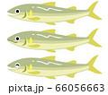 鮎のイラスト 66056663