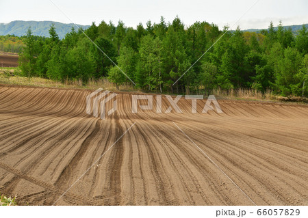 初夏の北海道厚沢部町で畑起こしが終わった畑の畝の風景を撮影 66057829