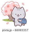 ネコ入学式青 66065357