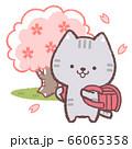 ネコ入学式赤 66065358
