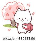 白ネコ入学式赤 66065360