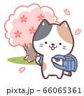 三毛ネコ入学式青 66065361