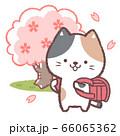 三毛ネコ入学式赤 66065362