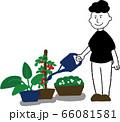 家庭菜園する男性 66081581