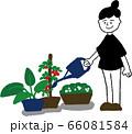 家庭菜園する女性 66081584