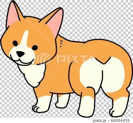 可愛的小狗柯基 66084856