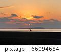 日没と海鳥 長崎県南島原市口之津町早崎地区田尻浜漁港 66094684