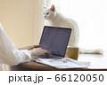 テレワークの若い女性とくつろぐ猫 66120050