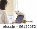 テレワークの若い女性とくつろぐ猫 66120052