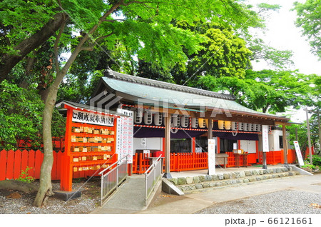 横浜市戸塚区 相州春日神社の拝殿と新緑 66121661