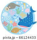 かわいい 水族館 アクアリウム お魚 丸型カット 66124433