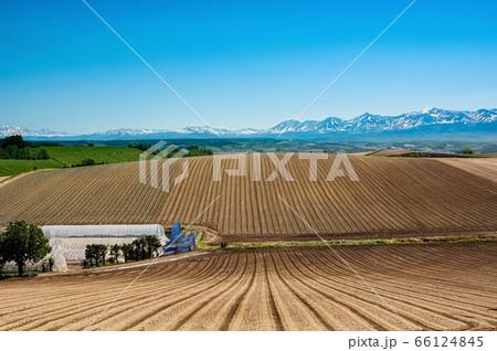 初夏を迎えた富良野の田園風景(北海道 富良野市) 66124845