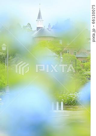 北海道函館市トラピスチヌ修道院の紫陽花越しの尖塔 66130075