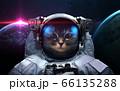 Cat astronaut in space 66135288