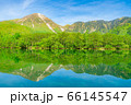 新緑の上高地 大正池と焼岳 【長野県】 66145547