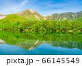 新緑の上高地 大正池と焼岳 【長野県】 66145549