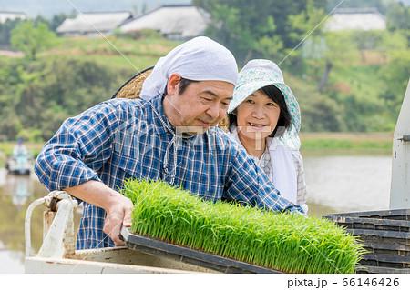田植え用の苗を軽トラから降ろす夫婦 66146426