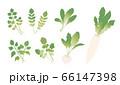 春の七草 66147398