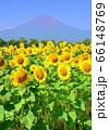 ヒマワリと富士山-777773 66148769