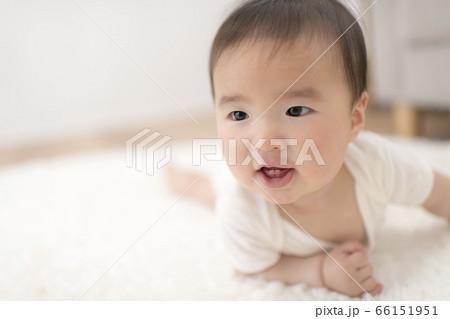 自宅のリビングでハイハイする生後8ヶ月の赤ちゃん 66151951