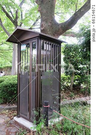 公園の中にたたずむ公衆電話ボックス 66154671