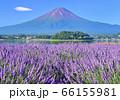 ラベンダーと富士山-777638 66155981