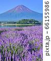 ラベンダーと富士山-777643 66155986