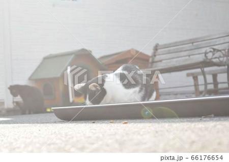 晴天の中美味しそうに夢中に食事をする猫 66176654